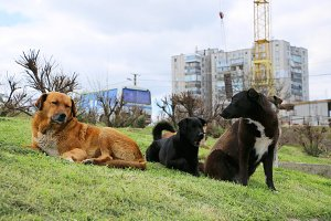 Homless dogs