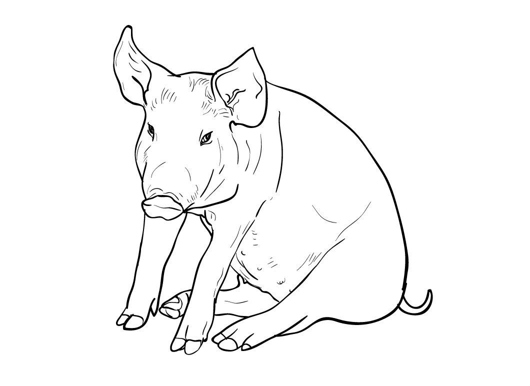 Uncategorized Drawing Pig drawing of pig illustrations creative market