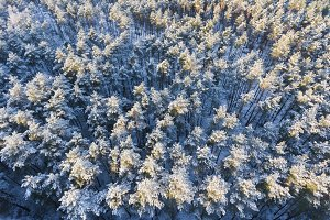 Aerial winter forest
