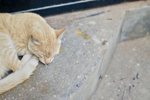 Orange tabby cat napping