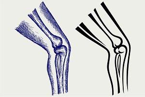 Human leg bones SVG