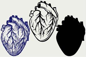 Human heart SVG