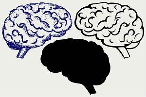 Human brain SVG