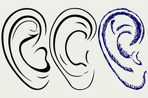 Human ear SVG