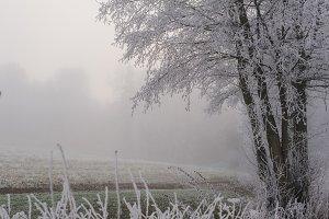 A frozen field in Winter