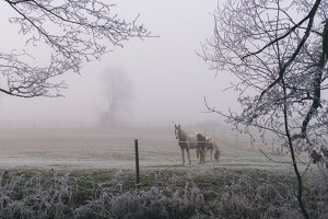 Horse on a cold Winters Day