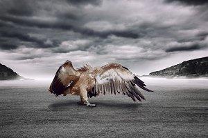 Dramatic vulture