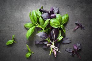 Green and purple basil.