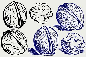Several walnuts SVG