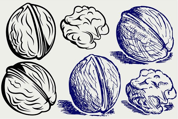 Several walnuts SVG