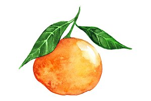 Watercolor ripe mandarin clementine