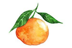 Watercolor ripe mandarin clementine