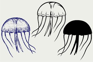 Jellyfish SVG