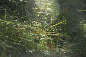 Grass in Sun Flare
