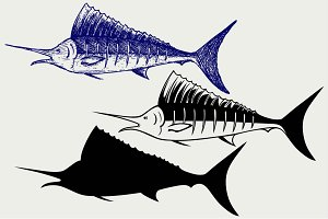 Sailfish saltwater fish SVG