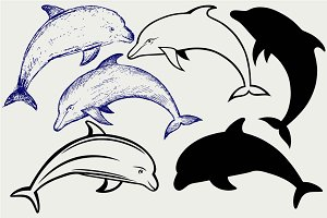 Beautiful dolphin SVG