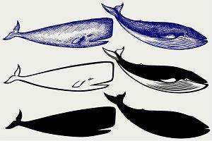 Humpback whale SVG