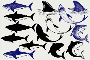 Many reef sharks SVG