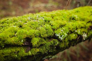 Trunk with moss