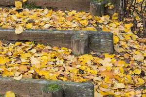Fallen leaves on the park stairs