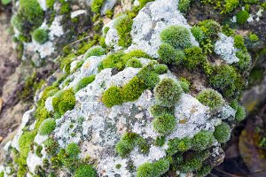 Rock covered by moss