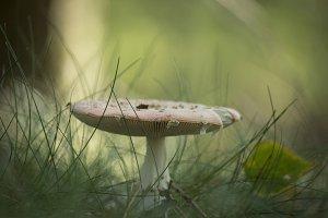 Mushroom #1