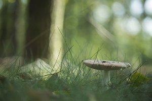 Mushroom #2