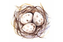 Watercolor nest with quail eggs