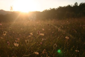 Sunlit Flowers in Field