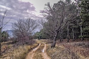 Road to the dark pine forest HDR