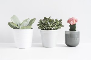 Styled Image, Three Succulent