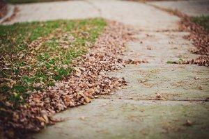 Sidewalk Leaves