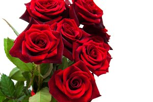 Fresh Red roses
