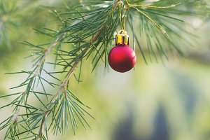 Christmas ball on spruce branches