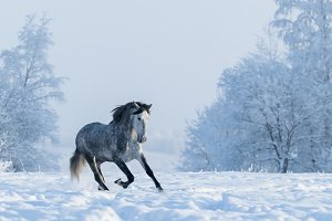 Winter landscape and horse