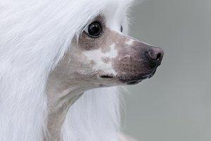 Close up portrait of dog
