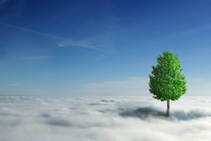 tree on the white clouds