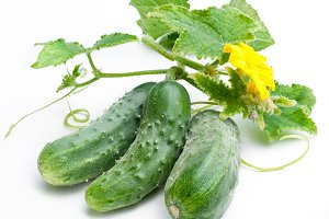 Cucumbers with leaves on white background.