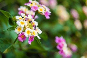 Flower in focus
