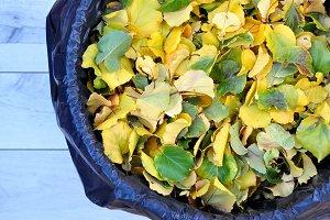 yellow leaves in recycling bin