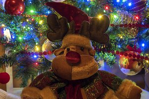 Teddy Reindeer Christmas