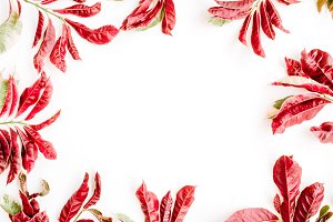 Red leaf frame