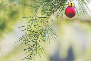 Christmas ball on spruce branches 2