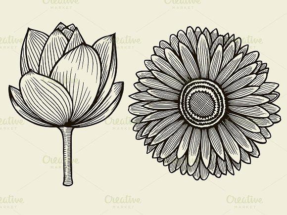 Hand Drawn Sketch Flower
