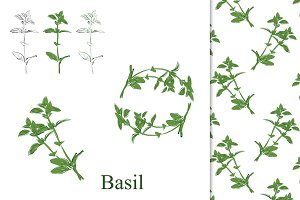 Basil hand drawn