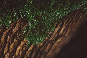 Moss on a tree
