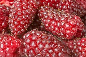 Tayberries closeup