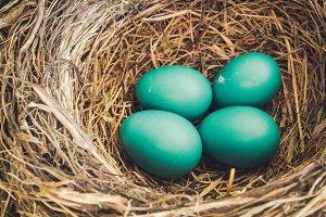 01 Bird nest with 4 eggs