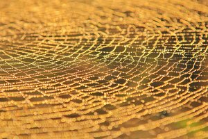 Spider Web Dew - Natural Patterns