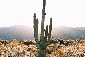 Sunrise cactus in the desert